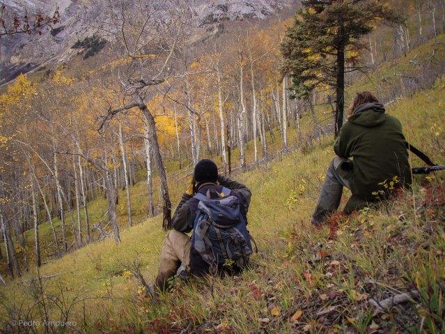 Bowhunting British Columbia Pedro Ampuero Moose Elk