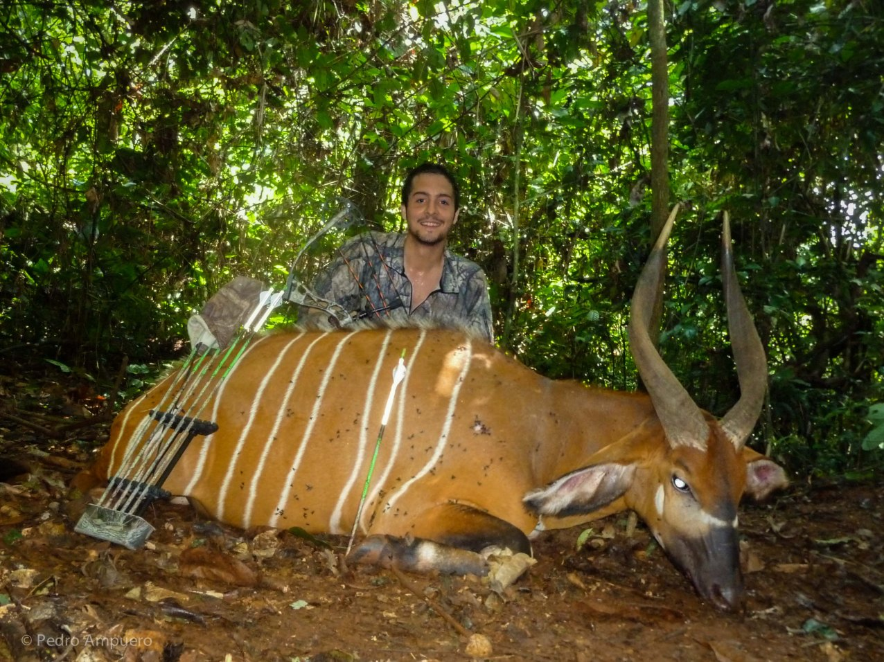 Bowhunting Cameroon Rainforest Pedro Ampuero