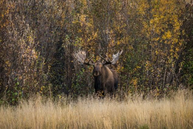 2017.09.20.190400.Yukon-74132