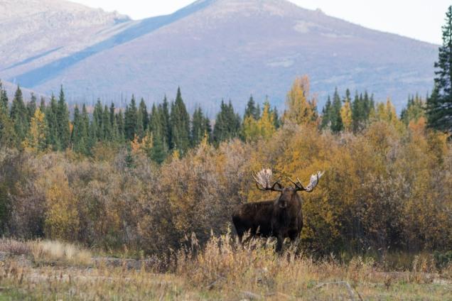 2017.09.20.190532.Yukon-74146